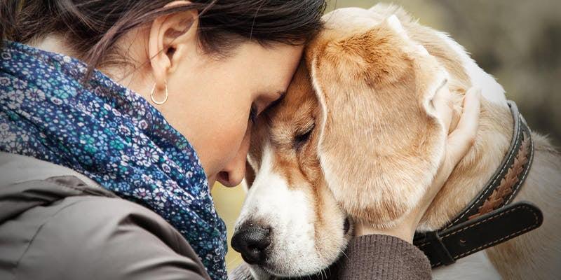 Event Trends cours de Reiki pour les animaux de compagnie